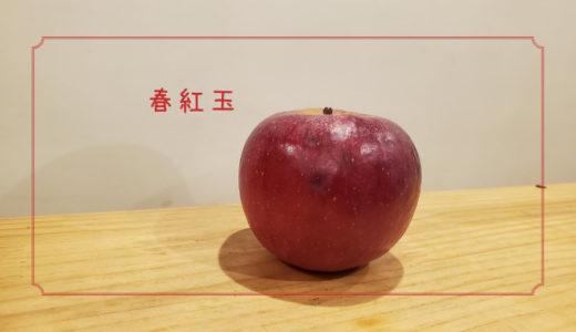 【春紅玉】は紅玉の弱点を克服したりんご|りんごの品種を勉強する#3