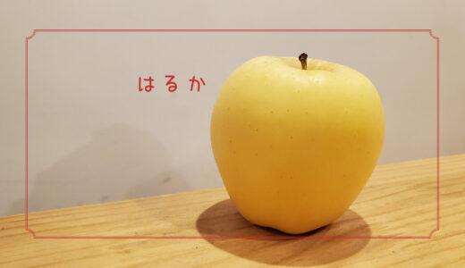 【はるか】冬まで大事に栽培される箱入り娘のような甘いりんご|りんごの品種を勉強する#8